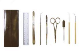 7-399 Dissecting Set Basic